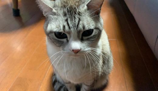 【活動日記】さすが福岡。スーパーの刺身も美味かった(2019.02.18)
