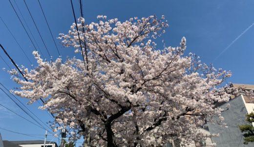 【活動日記】選挙とは無関係の日曜日(2019.04.07)