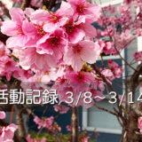 【活動記録】マガジンハウスのWebメディア「コロカル」で初執筆(2021.03.08~03.14)